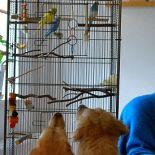 Unter Vögeln