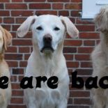 We are back! Oder was macht der Hund in der Stadt