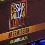 Cesar Millan Live in Hamburg und wir waren dabei